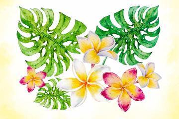 彩绘热带龟背竹叶和鸡蛋花矢量图