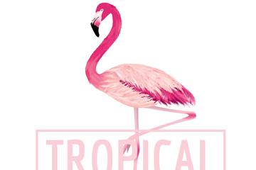 粉色热带火烈鸟矢量素材