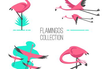 4组粉色热带火烈鸟矢量素材