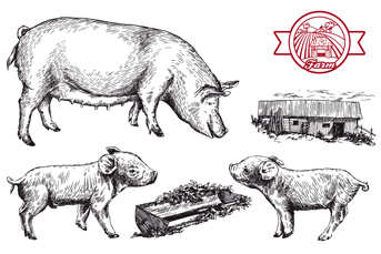 3款手绘猪设计矢量素材