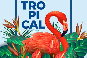 美丽热带火烈鸟和鹤望兰矢量图