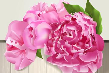 美丽粉色牡丹花矢量素材