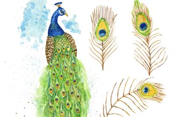 彩�L孔雀和3款孔雀羽毛矢量�D