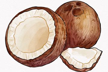 手绘切开的椰子矢量素材