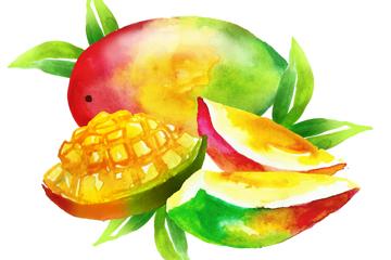 水彩绘切开的芒果矢量素材