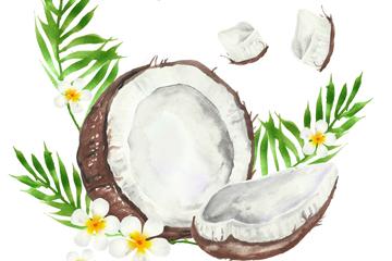 彩绘打开的椰子和鸡蛋花矢量素材