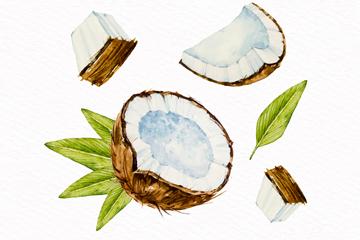 水彩绘切开的椰子矢量素材