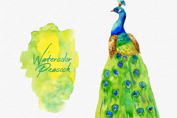 水彩绘孔雀设计矢量素材