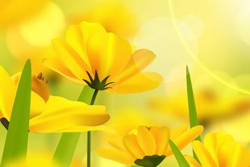 美���光下的�S色花卉矢量素材