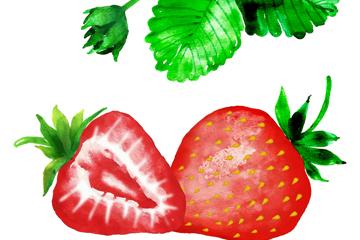 水彩�L草莓和草莓�~矢量素材