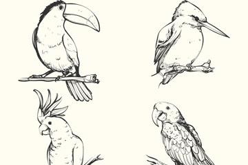 4款手绘鸟类设计矢量素材