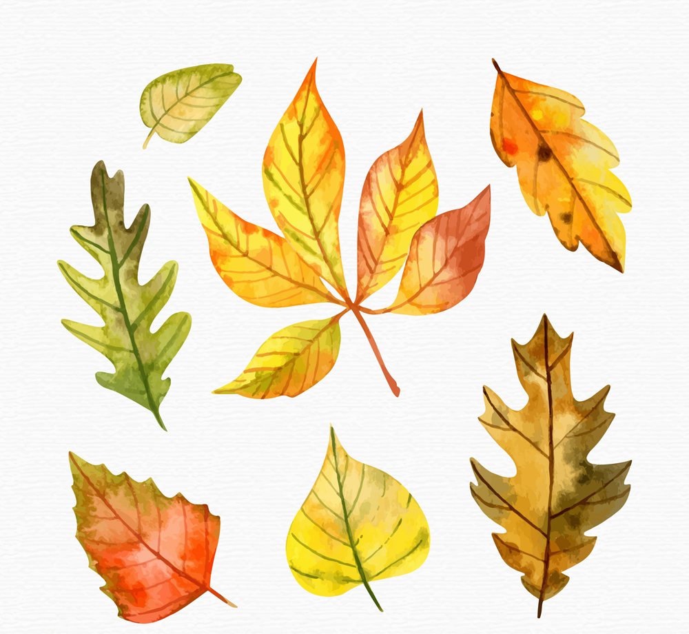 7款水彩绘秋季树叶矢量素材图片
