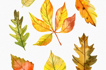 7款水彩绘秋季树叶矢量素材
