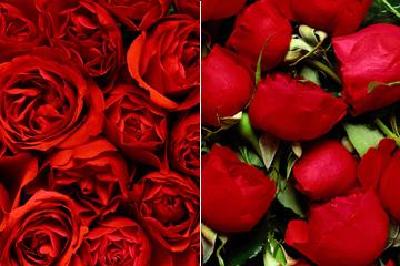 2张红色玫瑰平铺背景图片