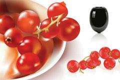 矢量西红柿和灯笼果素材下载