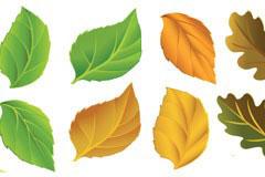 一组极富立体感和质感的树叶矢量素材