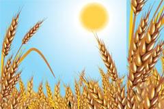小麦大丰收矢量素材