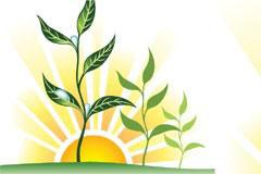 日落时带着露水的树苗矢量素材