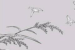 水稻和麻雀线描矢量素材