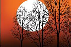 日落时的树木剪影矢量素材
