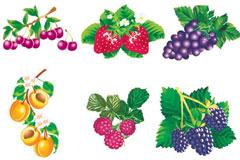 六款生动逼真的水果矢量素材