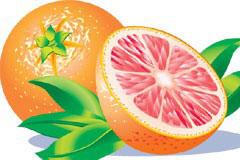 香橙及果肉矢量素材