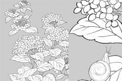 紫阳花与蜗牛线描植物花卉矢量素材