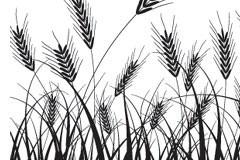 一款小麦黑白剪影矢量素材