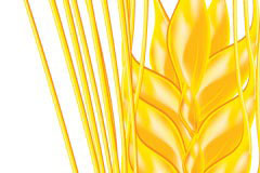 一株精致的麦穗矢量素材