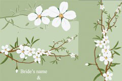 一组清新素雅的白色小花矢量素材
