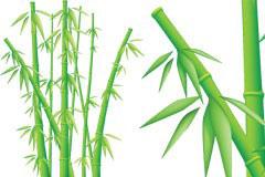 一款栩栩如生的翠竹矢量素材