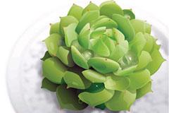一款质感超强的绿色植物矢量素材
