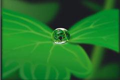 水珠里的世界植物矢量素材