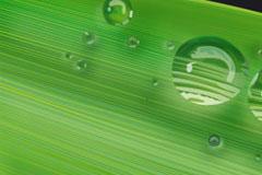 绿叶上滚动的水珠矢量素材
