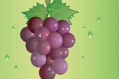 两款鲜艳欲滴的葡萄矢量素材