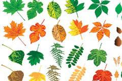 多款色彩缤纷的树叶矢量素材