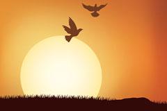 落日下的飞鸟剪影矢量素材