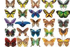 50款漂亮逼真的蝴蝶矢量素材