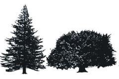 CDR格式树木精细素描矢量素材