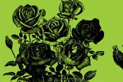 一款玫瑰花钢笔画矢量素材