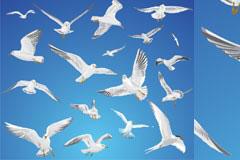 天空中自由翱翔的海鸥矢量素材