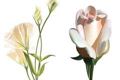 2款逼真的AI格式花卉矢量素材