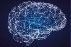 3D人类大脑模型矢量素材