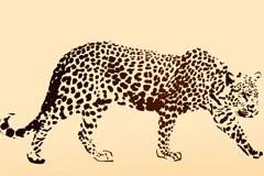 逼真的金钱豹和豹纹矢量素材