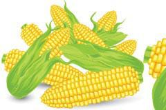 逼真的玉米矢量素材