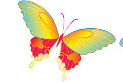 2只翩翩起舞的彩色蝴蝶矢量素材