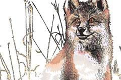 草丛中机敏的狐狸矢量素材