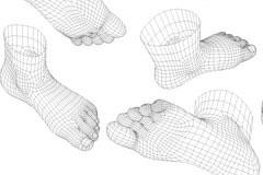 人脚3D模型矢量素材