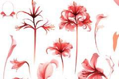 红色梦幻水彩花朵矢量素材