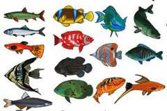 数款精美逼真的海洋鱼类矢量素材